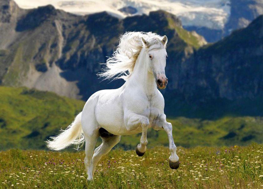 caballo blanco simon bolivar
