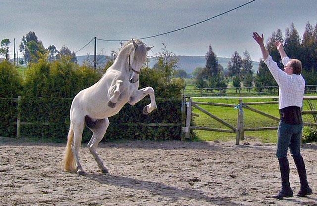 Doma de caballos clásicos