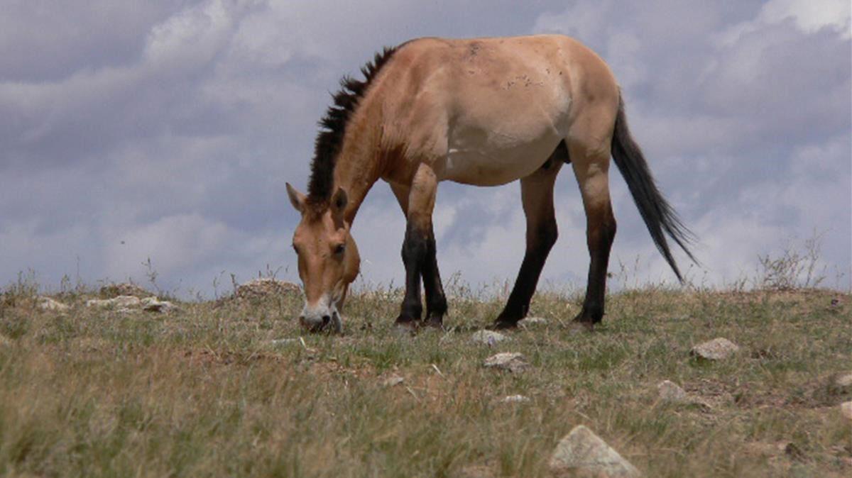 Todavia quedan caballos selvajes