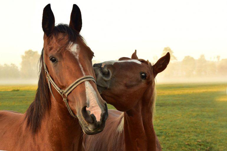 champús para caballos