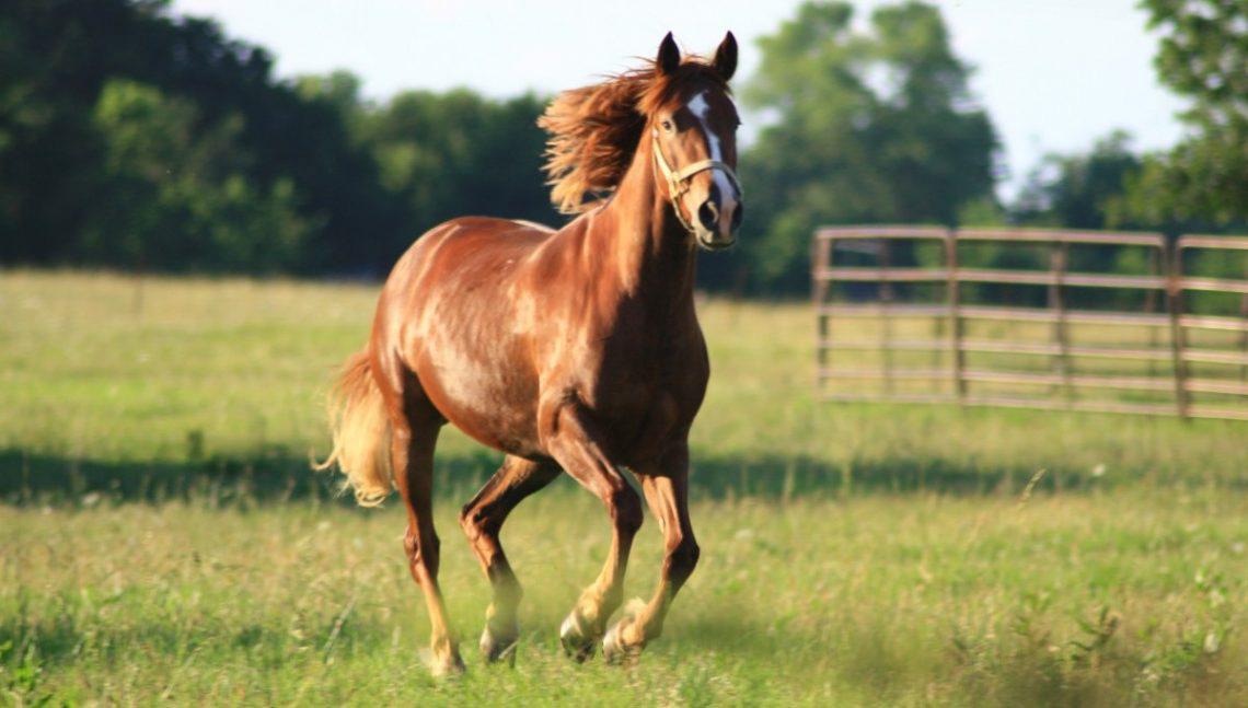 ecosistema natural para los caballos