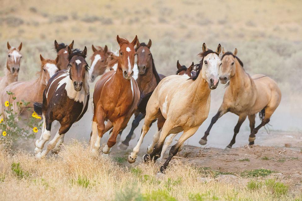 hábitat para los caballos