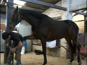 Cómo herrar caballos de forma sencilla