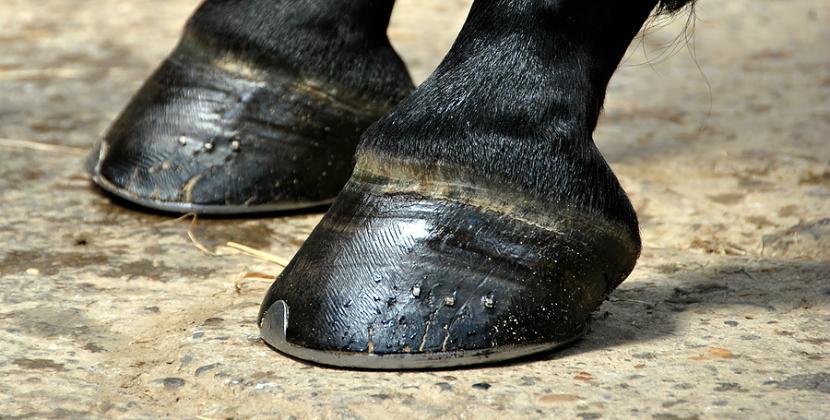 como herrar a un caballo