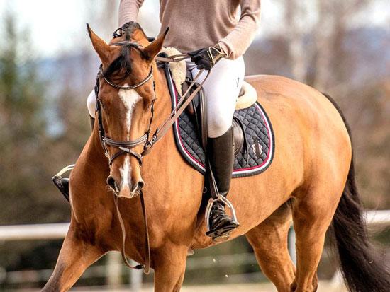 características de la equitación