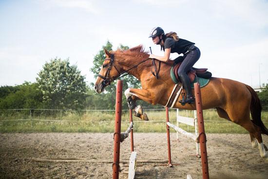 disciplinas de equitación