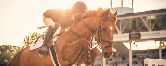 accesorios caballos amazon