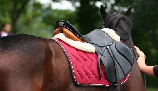 accesorios que comprar si tienes un caballo
