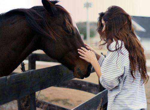 Como adoptar a un caballo