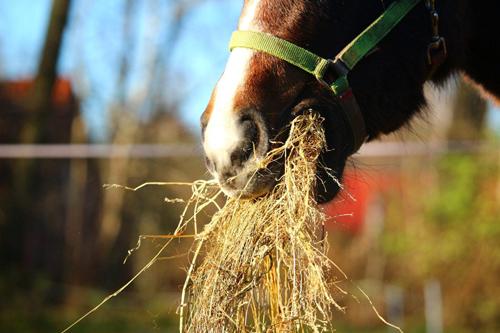 Consejos para tener un caballo